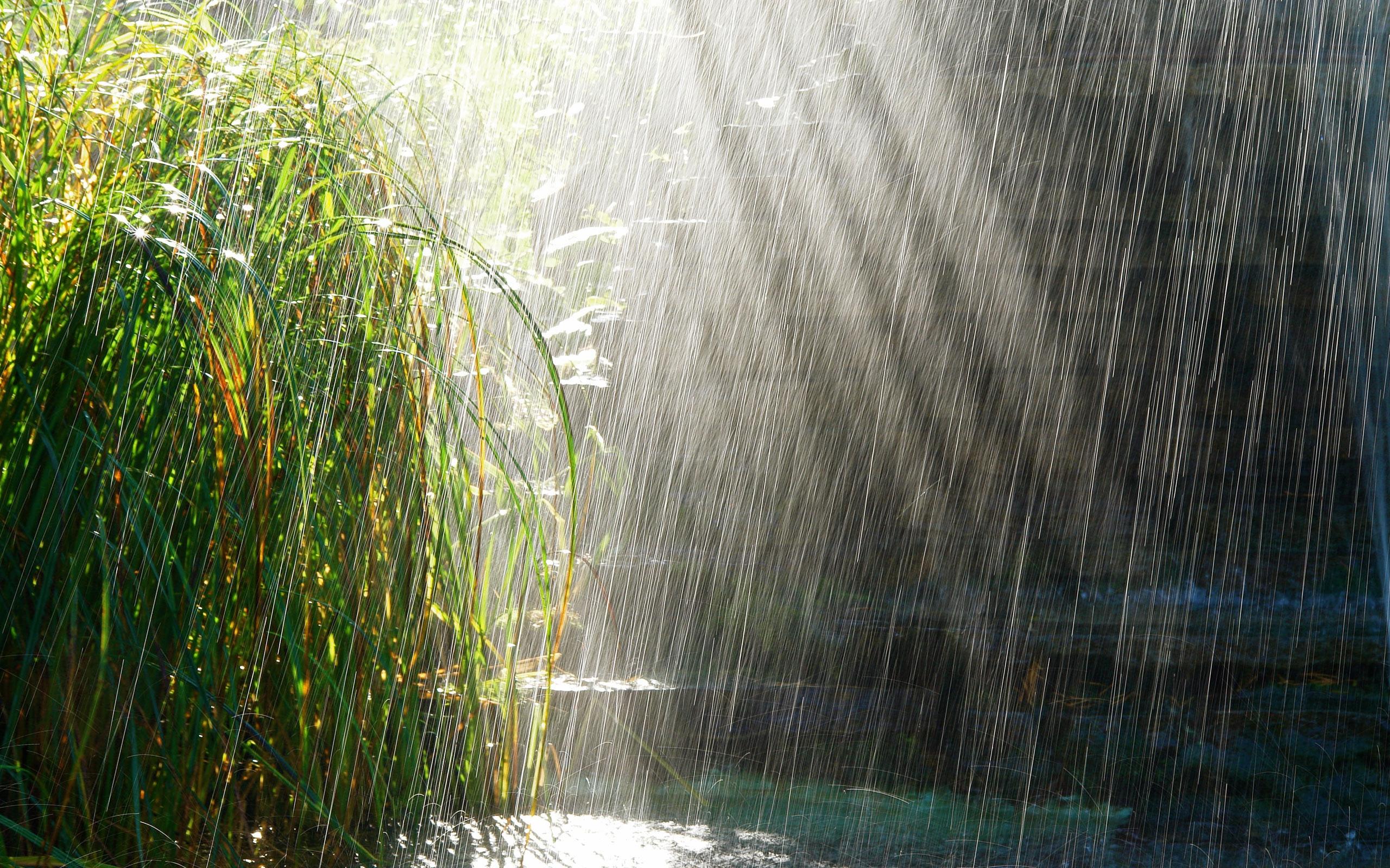 Rainy Day Bing Images