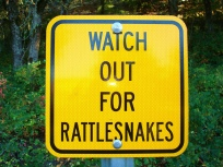 watchout for rattlesnake